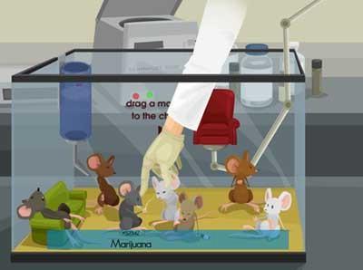 mice-on-drugs.jpg